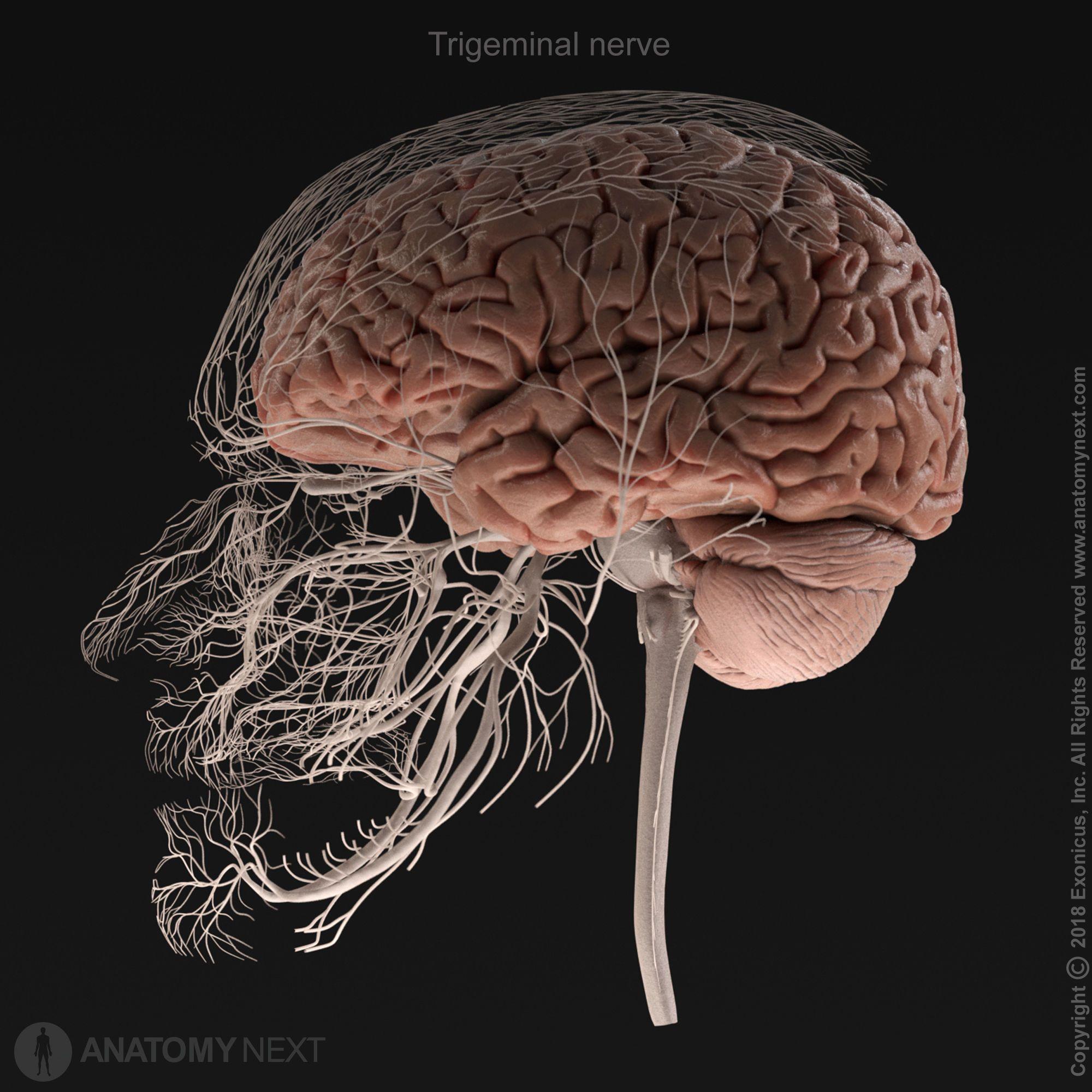Pierwsza edycja anatomii twarzoczaszki noworodka